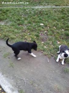 2 чудесных щеночка ищут дом