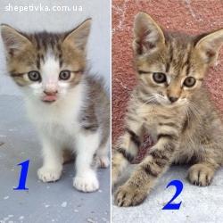 Допоможіть знайти дім для 15 котенят