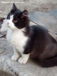 Котик шукає хороших господарів