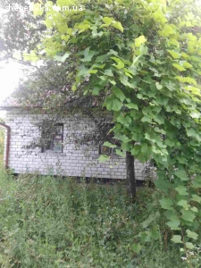 Продається будинок по вул. Толстого, 17.