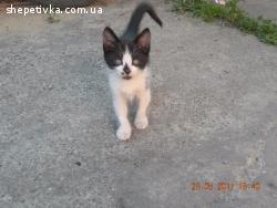Віддам кошенят в добрі руки:)
