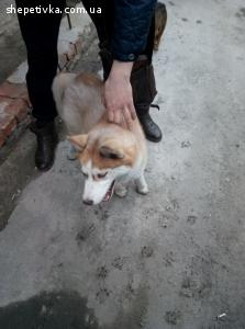 Знайдено собаку