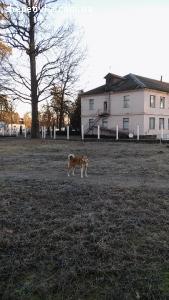 Знайшлася собака лайка