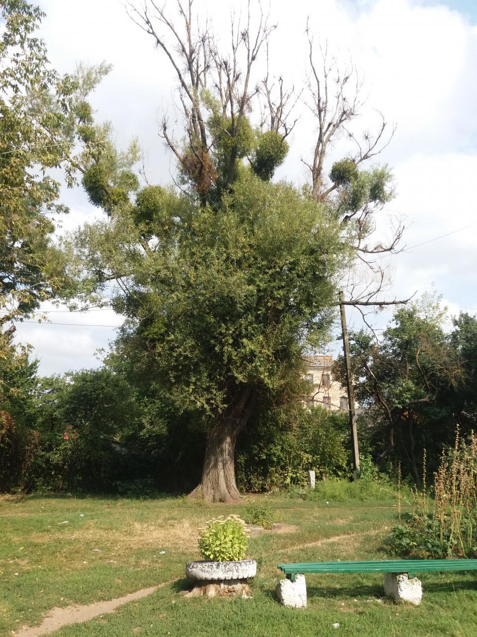 Видалення дерев у місті.