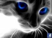 Morkovka аватар