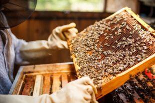 Бджолярів Шепетівщини закликають реєструвати пасіки