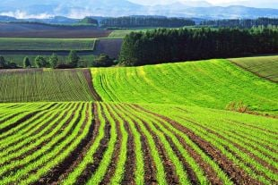 На Шепетівщині видано 2492 витягів з технічної документації про нормативну грошову оцінку земель сільськогосподарського призначення